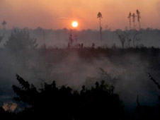 A 2008 fire sparked by logging equipment in the Great Dismal Swamp National Wildlife Refuge in Suffolk, Va., lasted 121 days and cost $12 million dollars. It was the longest and most expensive wildfire in Virginia history. Credit: U.S. Fish and Wildlife Service