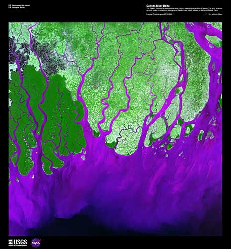 Ganges River Delta, imaged on February 1, 2000 by Landsat 7. The Ganges River forms an extensive delta where it empties into the Bay of Bengal. The delta is largely covered with a swamp forest known as the Sunderbans, which is home to the Royal Bengal Tiger. Credit: USGS/EROS.