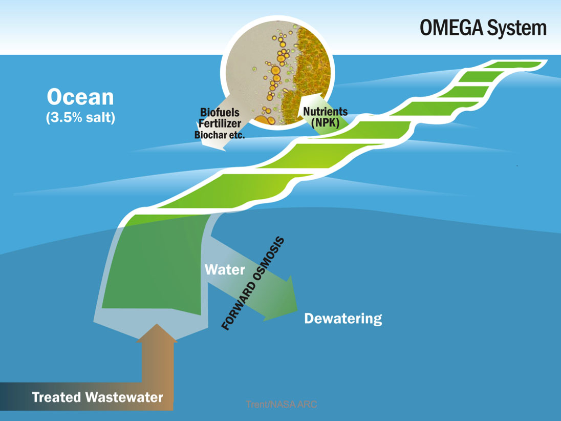 Waste water produces biomass, oil, and oxygen.