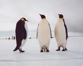 West Antarctica is a series of islands covered by ice. Think of it as a frozen Hawaii, with penguins.