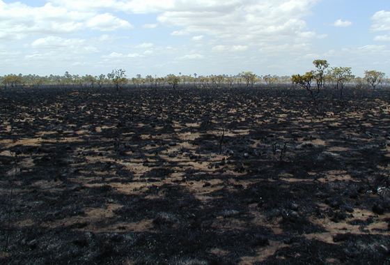 A charred surface remains in the wake of a fire in Roraima, the northernmost state in Brazil. Credit: NASA/Doug Morton