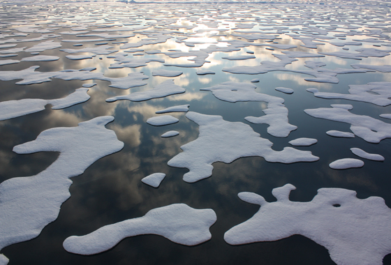 ICESCAPE, or Impacts of Climate on EcoSystems and Chemistry of the Arctic Pacific Environment, is a shipborne NASA mission to explore the impacts of climate change in the Arctic Ocean. During summer of 2011, the ICESCAPE scientists discovered a large bloom of ocean plant life growing under sea ice.