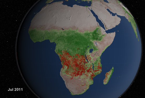 Africa experiences more extensive burning than any other region of the world. In July of this year, extensive fires covered much of the continent. The brightest fires, as observed by the MODIS instrument, are shown in orange and yellow. (Credit: NASA)