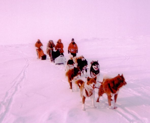 The team used a dogsled to traverse the final two miles to the exact geographical North Pole. Dr. Parkinson is the second human from the right.