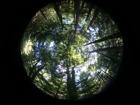 Hemispherical photograph of Penobscot Experimental Forest in Bradley, Maine. Credit: Dr. Sassan Saatchi / NASA Jet Propulsion Lab.