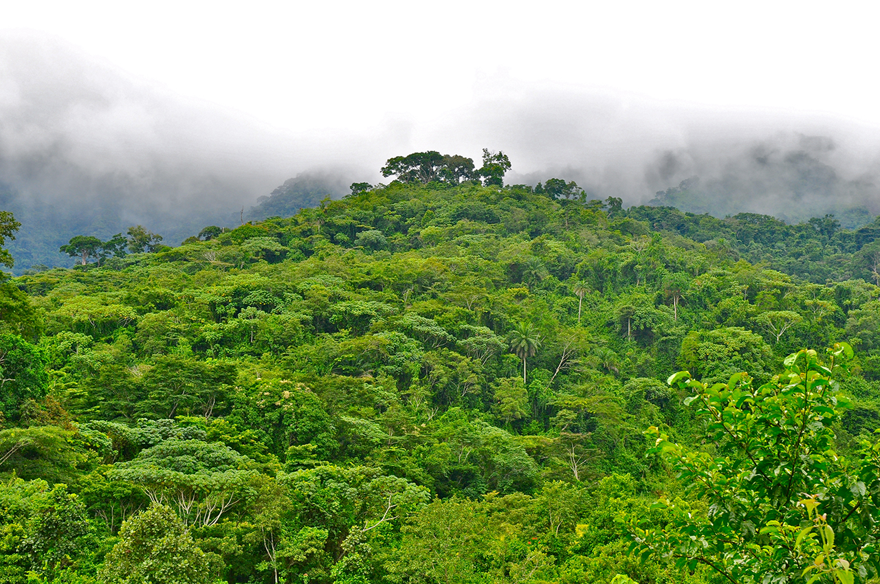 A view of the East Nimba Nature Reserve forest in Liberia.