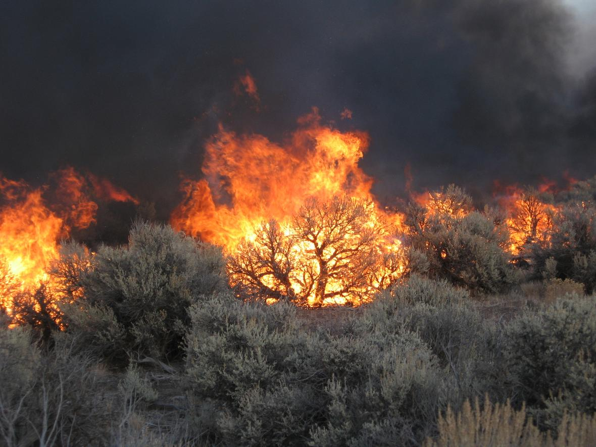 Fires burn sagebrush.