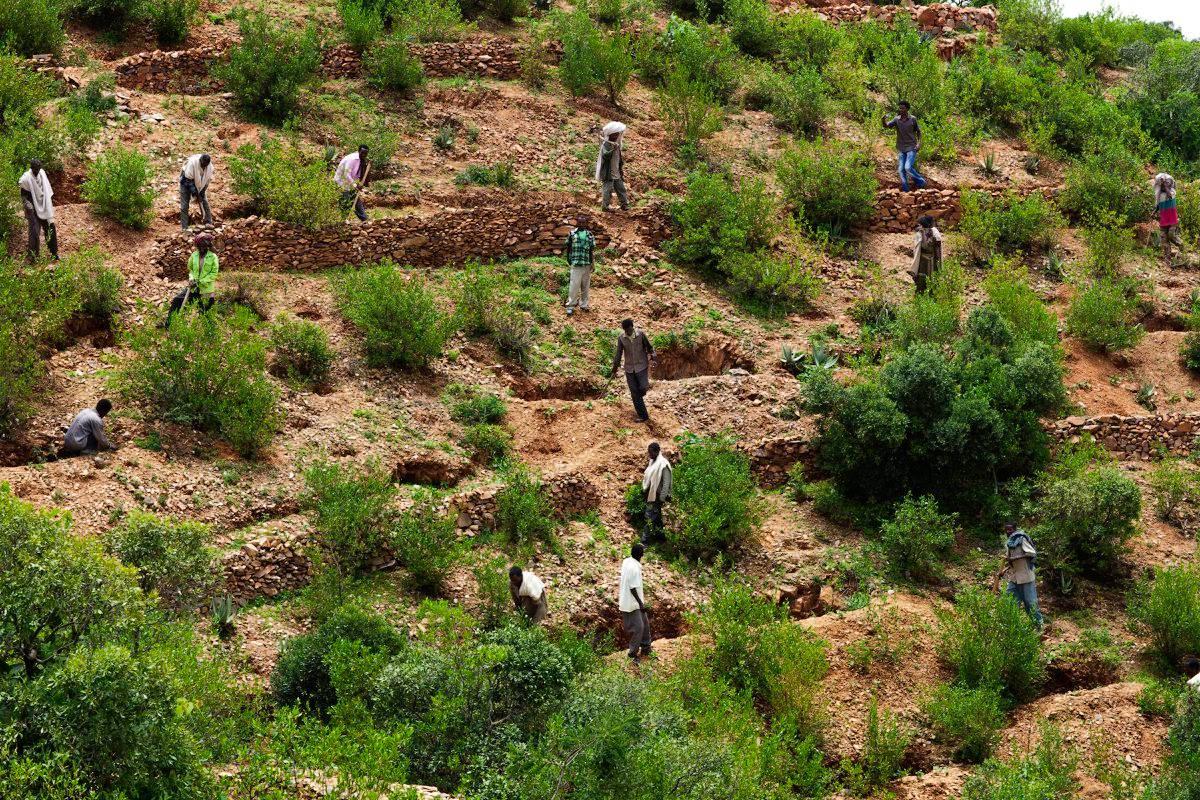 African Forest Landscape Restoration Initiative