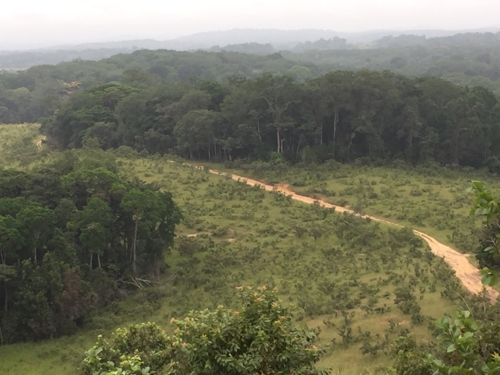 Gabon forest