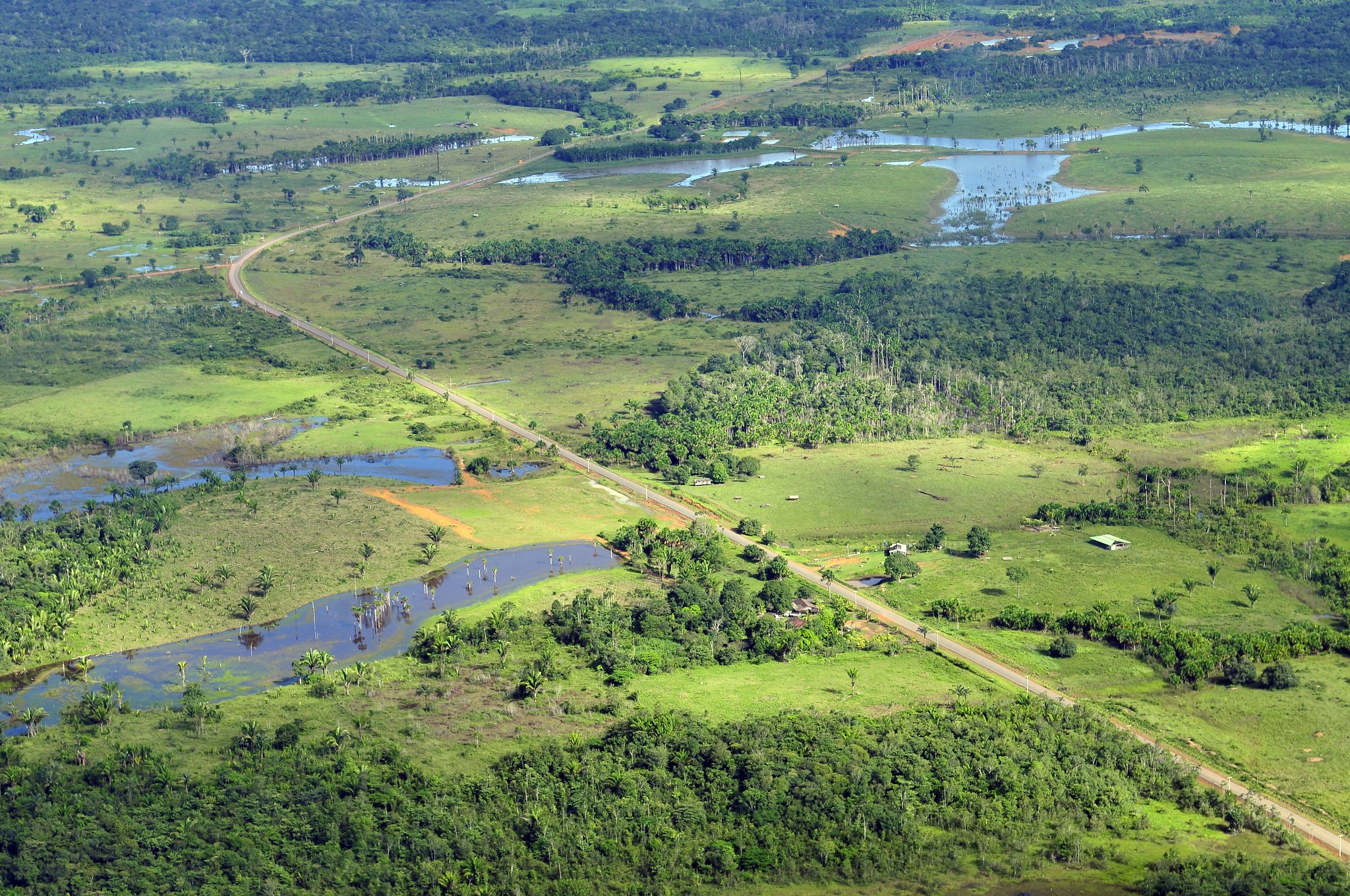 The Amazon rainforest near Manaus, Brazil