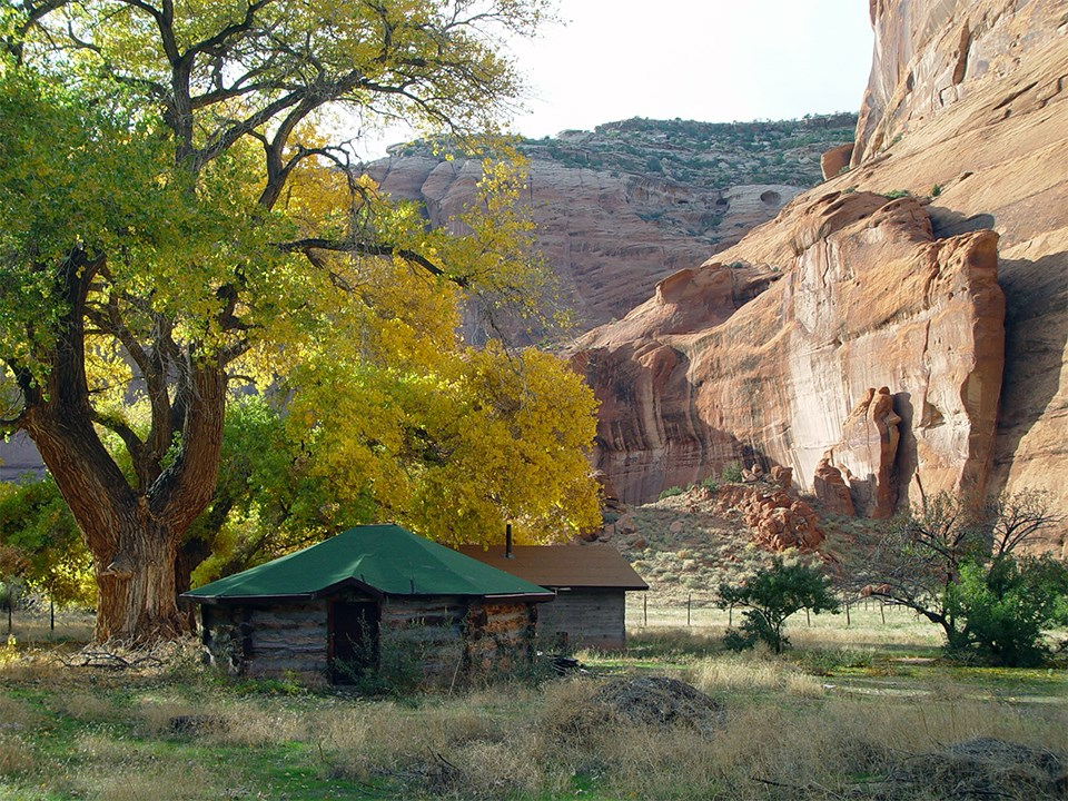 Phenology relates to the timing of periodic plant and animal life cycle events, such as leaves changing color in the fall in Canyon de Chelly National Monument in Arizona.