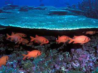 Since the beginning of the Industrial Revolution, the acidity of surface ocean waters has increased by about 30 percent