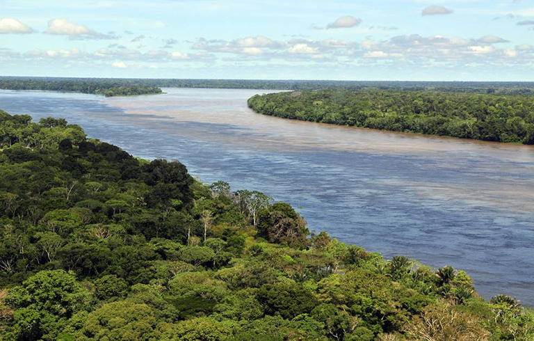 Tropical forest in the Amazon