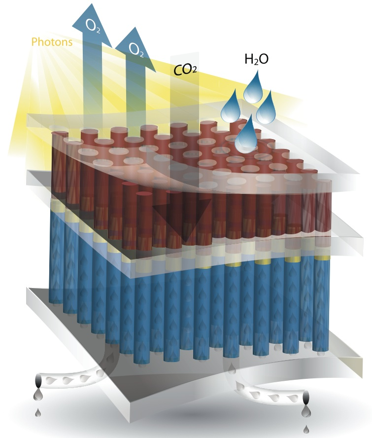 JCAP's artificial photosynthesis device will probably consist of layers like these. An upper membrane absorbs light, carbon dioxide and water, and allows oxygen to escape. Customized molecules embedded in an inner membrane catalyze reactions that produce the desired fuel, which the base layer wicks away to collectors.