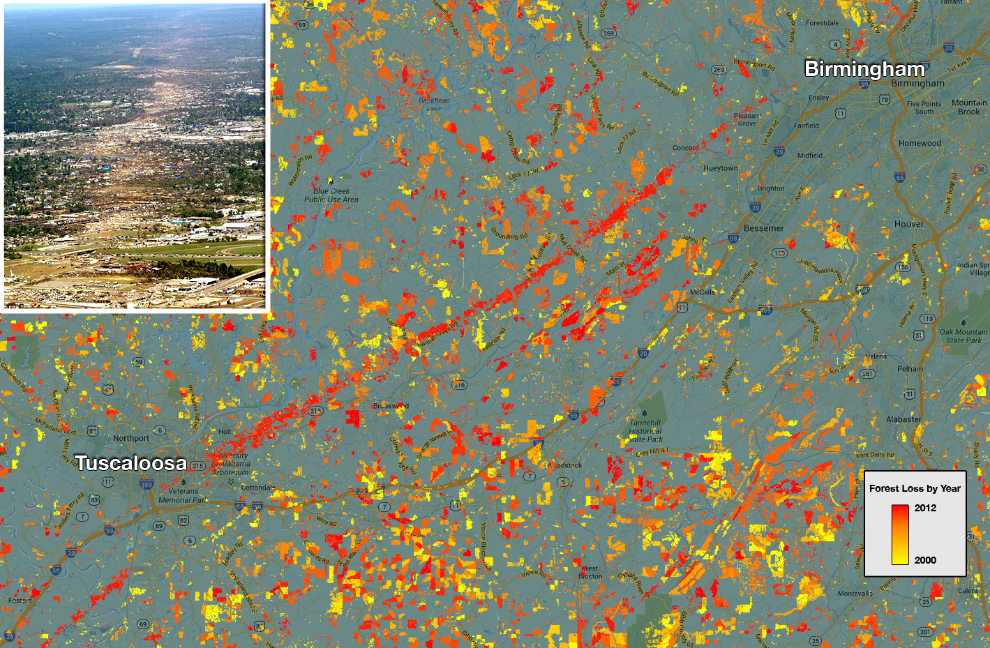 The forest cover maps also capture natural disturbances such as this 2011 tornado path in Alabama. In this map, the colors represent forest loss by year, with yellows representing loss closer to 2000 and reds representing later forest loss, up to 2012. Image Credit: NASA Goddard, based on data from Hansen et al., 2013.