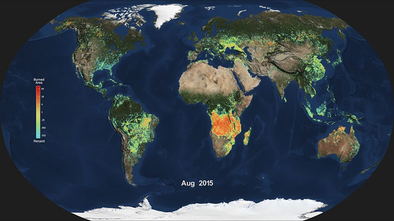 Monthly average global burned area for Aug. 2015, produced from NASA's MODIS instrument. Light blue indicates a smaller percentage of burned area, while red and orange indicate a higher percentage of burned area. Credit: NASA.