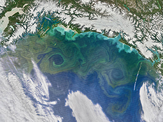 From microscopic to multicellular: Six Stories of life that NASA sees from space