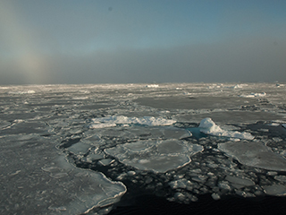 With thick ice gone, Arctic sea ice changes more slowly