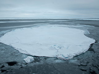 Wintertime Arctic sea ice growth slows long-term decline: NASA
