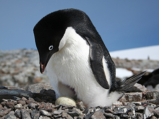 Space views of penguin 'poo' yield insights