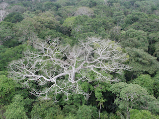 Pinpointing Tropical Forests with High Ecological 'Quality'