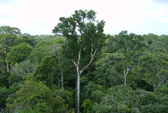 Old-growth Amazon tree canopy in Tapajós National Forest, Brazil. A new NASA study shows that the living trees in the undisturbed Amazon forest draw more carbon dioxide from the air than the forest's dead trees emit. Image credit: NASA/JPL-Caltech