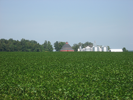 A soybean field in Ohio. Credit: WikiMedia Commons