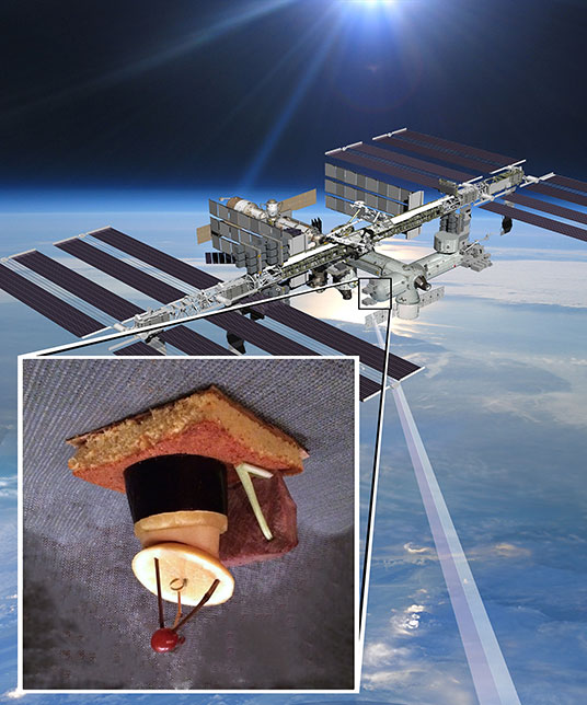 RapidFood, or: Revenge of the Space Cornbread – Climate ...