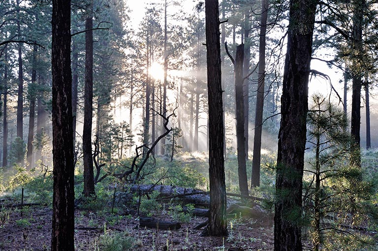Water evaporating from forest soil in the morning sun. Soil moisture links together the cycles of water, solar energy and carbon in plants. Credit: USDA
