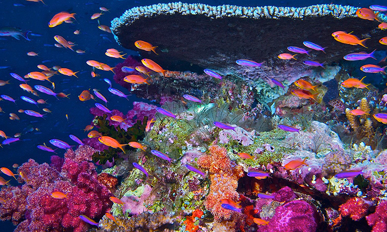 Keeping An Eye On Coral Reef Health From Space Climate