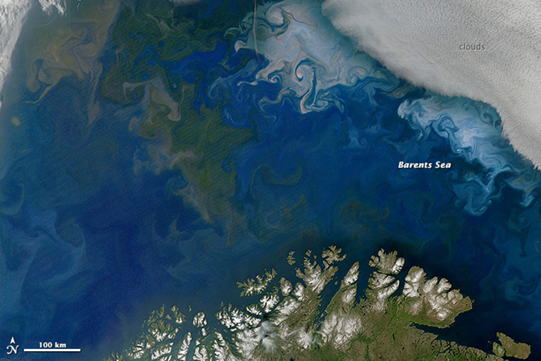 Study shows oceanic phytoplankton declines in northern hemisphere phytoplankton blooms in the barents sea off the coast of norway and russia shown in gumiabroncs Images