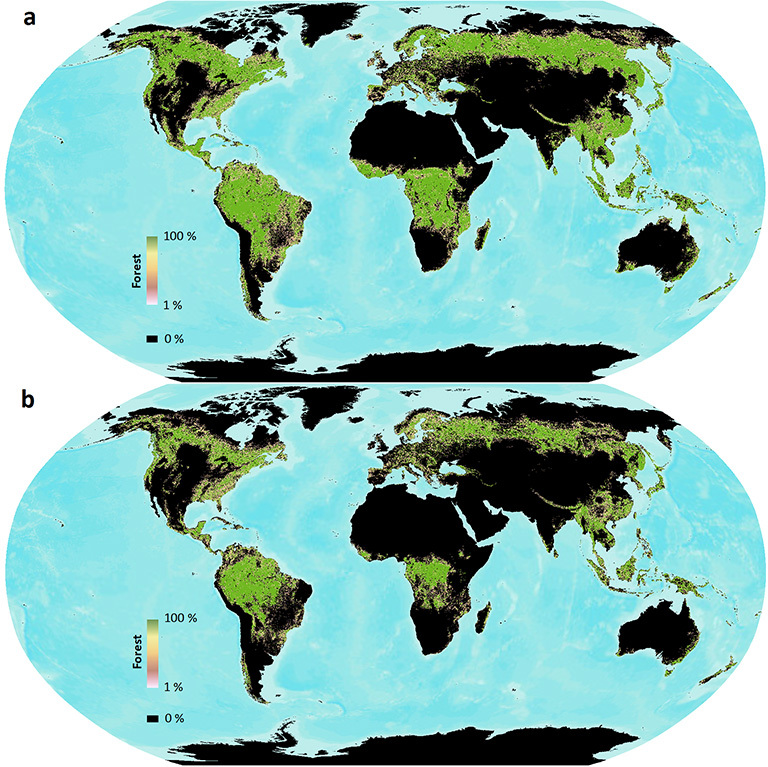 When different definitions of forest are used, satellite forest cover measurements can vary widely. Here global forest cover as measured by Landsat is shown using two different UN Framework Convention of Climate Change (UNFCCC) forest definitions: 10 percent tree cover (top) and 30 percent tree cover (bottom). Data are publicly available at www.landcover.org. Credit: Sexton, et al.