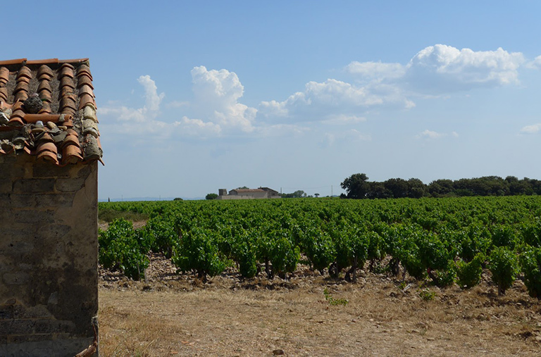 French vineyards like the one in the photograph are experiencing earlier harvests in recent years as the region's climate has warmed. Credit: Elizabeth Wolkovich/Harvard University.