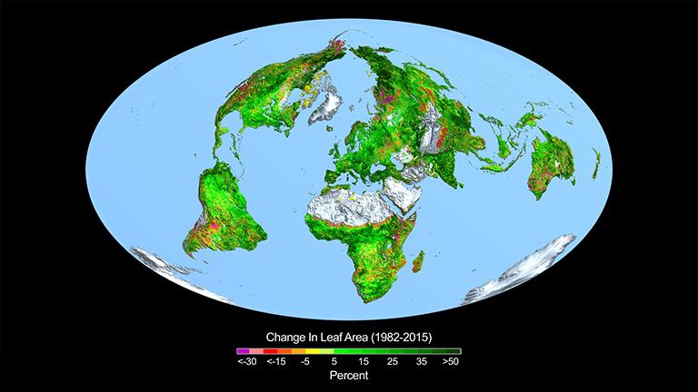 Masa zieleni na Ziemi wzrosła o wartość odpowiadającą Stanom Zjednoczonym!