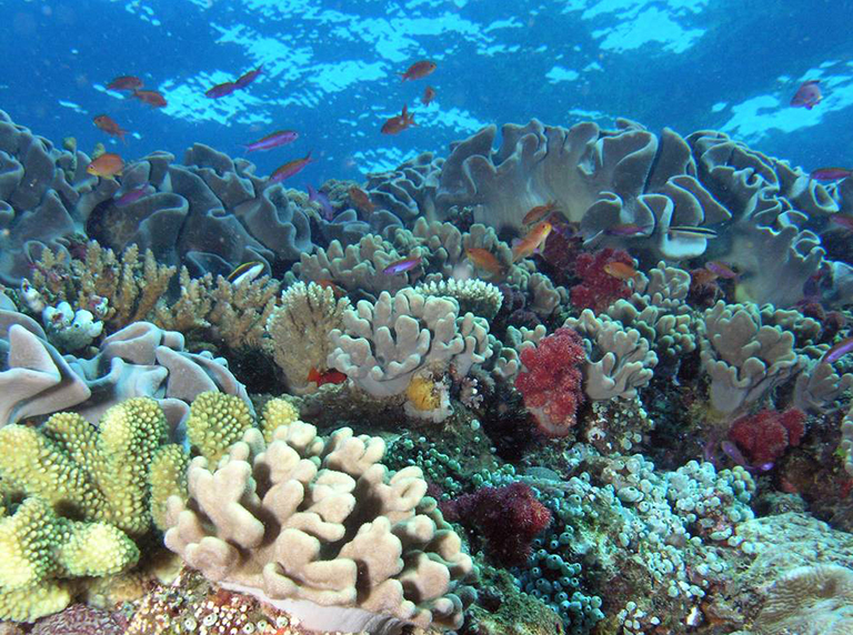 NASA coral reef studies in Hawaii this winter will help scientists understand this unique environment. Credit: NOAA.