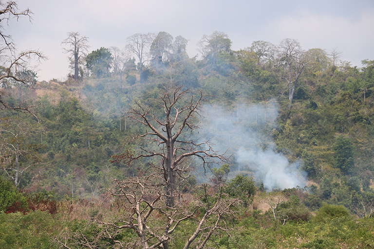 Smoke from small-scale burning on the northern side of São Tomé island. Although burning was prevalent across São Tomé, the vast majority of the smoke in our study area originated from the south-central African continent, in countries like Angola and the Democratic Republic of the Congo. Credit: Michael Diamond.