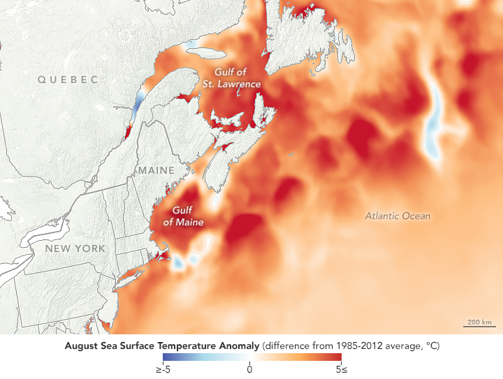 Watery heatwave cooks the Gulf of Maine – Climate Change: Vital Signs of the Planet