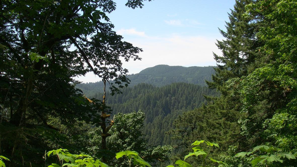 A view of Siuslaw National Forest in Oregon.