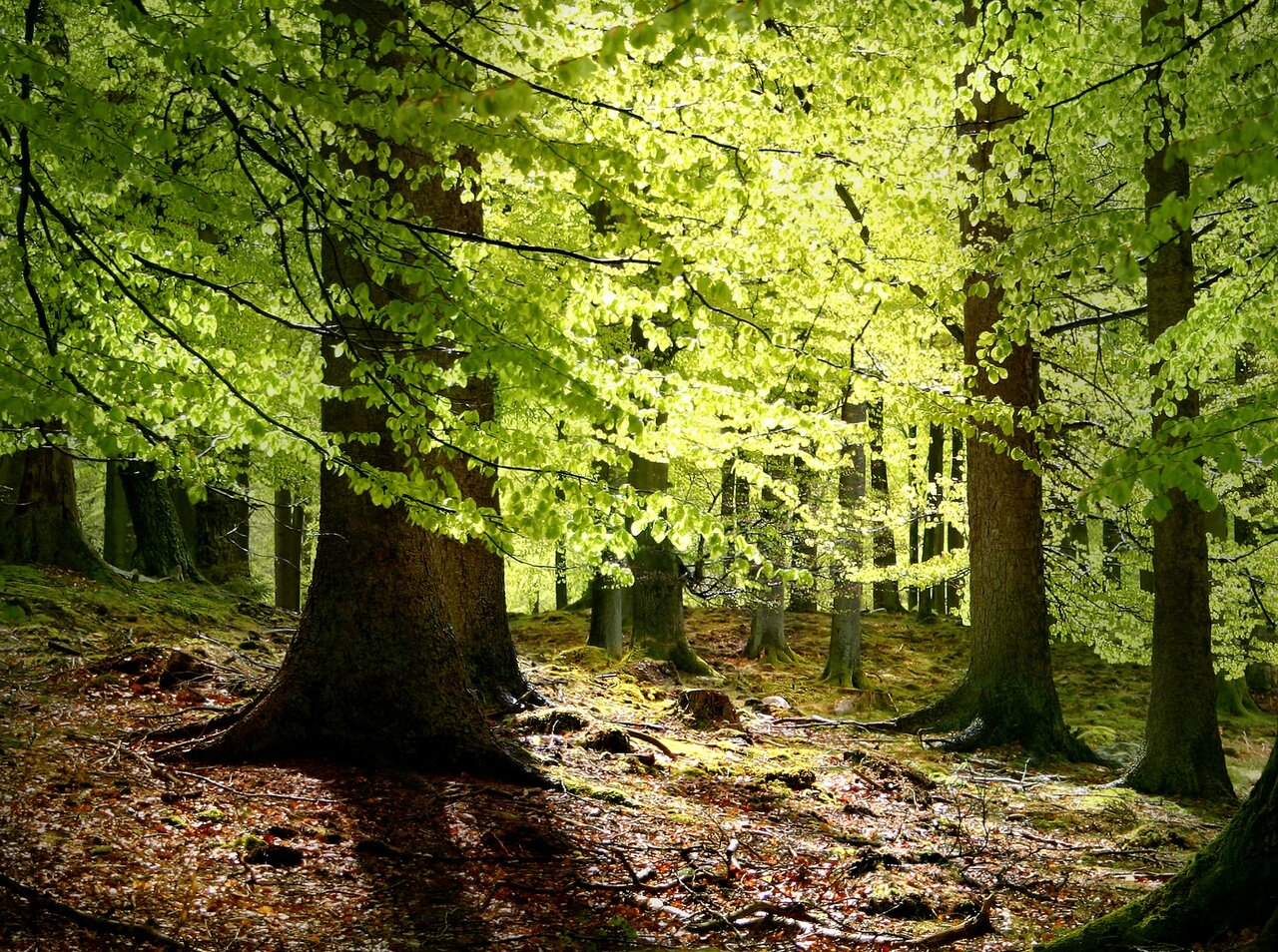 An image of a forest with bright green leaves