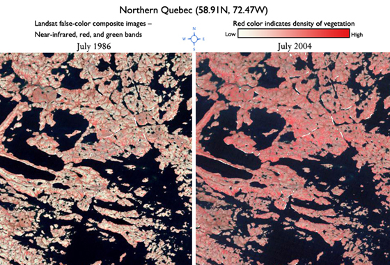 Comparison of area in Northern Quebec showing increased vegetation between 1986 and 2004. In this false-color Landsat image, more red color indicates more vegetation. Credit: Jeff Masek.