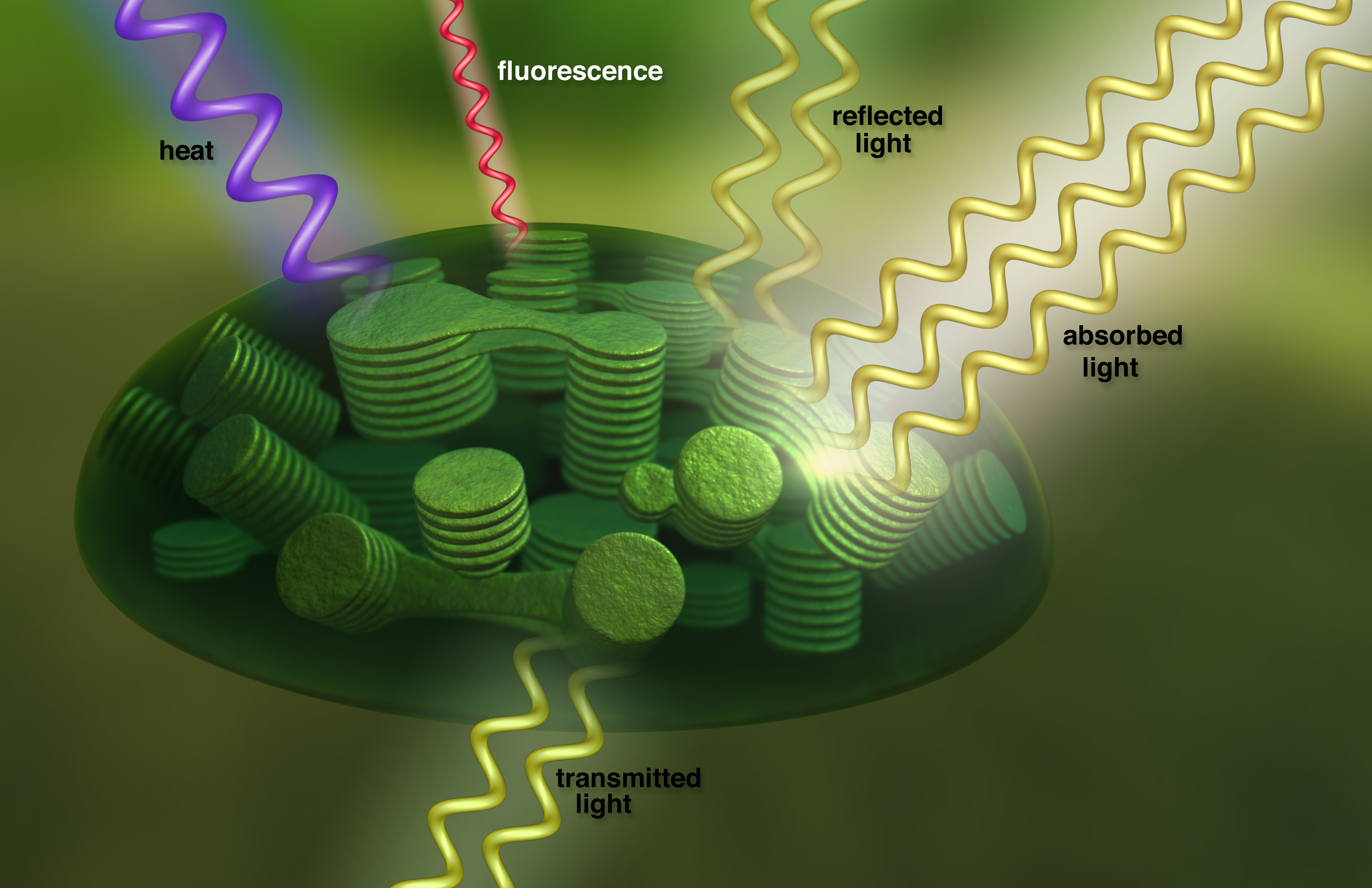Seeing Photosynthesis From Space Nasa Scientists Use
