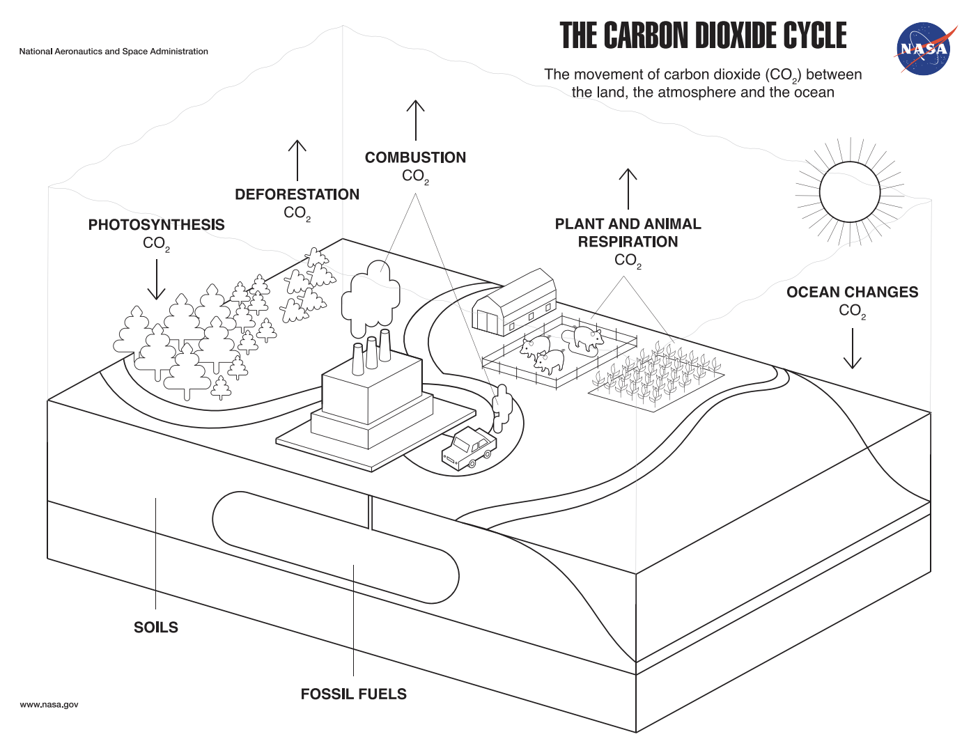 Coloring Page: The Carbon Dioxide Cycle
