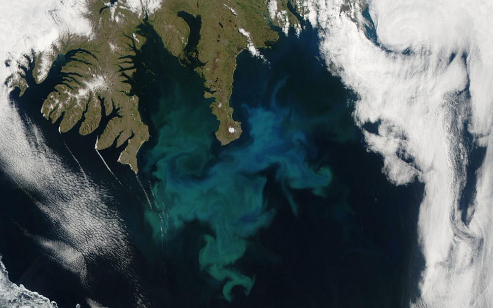 Phytoplankton bloom off western Iceland; 24 June, 2010. Taken by the Aqua satellite.