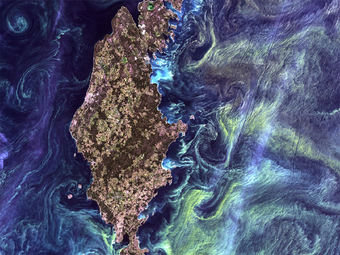 VAN GOGH FROM SPACE: In the style of Van Gogh's painting 'Starry Night,' massive congregations of greenish phytoplankton swirl in the dark water around Gotland, a Swedish island in the Baltic Sea. Phytoplankton are microscopic marine plants that form the first link in nearly all ocean food chains. Population explosions, or blooms, of phytoplankton, like the one shown here, occur when deep currents bring nutrients up to sunlit surface waters, fueling the growth and reproduction of these tiny plants. Image taken by Landsat 7 on July 13, 2005.